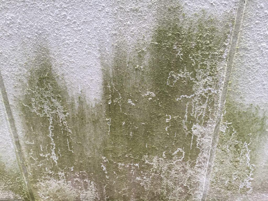 外壁塗装 汚れ カビ